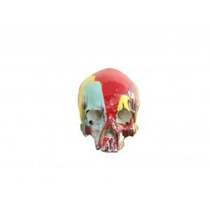 Crane design coloré tête de mort