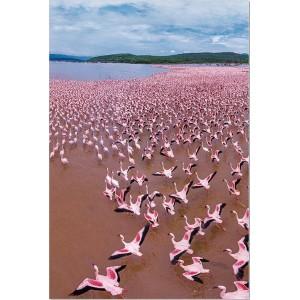tableau plexiglas verre acrylique - Lac et flamants roses - paysage - nature - panorama- triptyque