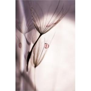 tableau plexiglas verre acrylique - photo graines de pissenlit - nature - paysage - triptyque