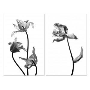Tableau plexiglas verre acrylique - photo NOIR et BLANC - décoration mur -fleur - nature - diptyque - TULIPES